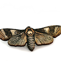 Laser Cut Poecilla Sphinx Moth Brooch