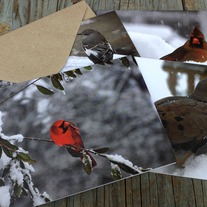 Four Snowy Day Birds Note Cards