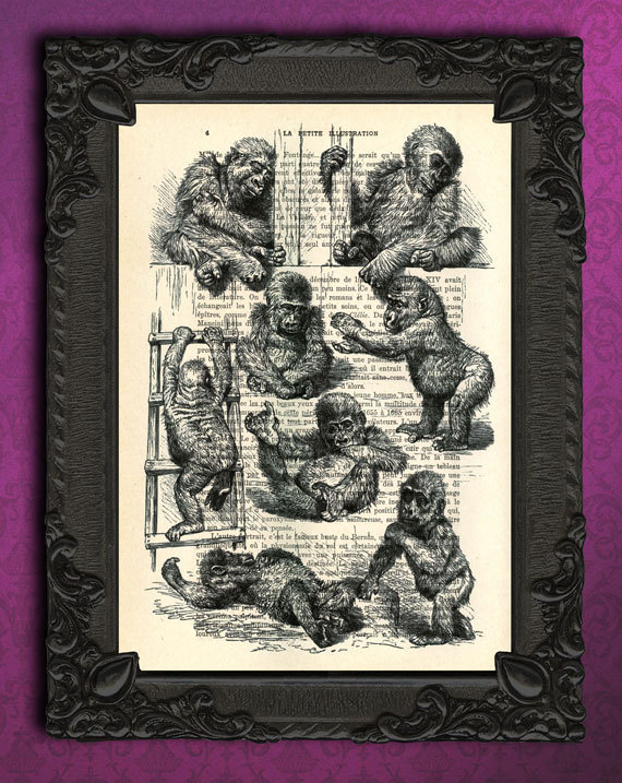 baby monkey poster baby gorilla mixed media