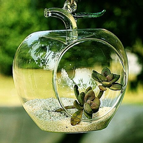 Apple Shaped Clear Glass Planter For Small Succulents Air