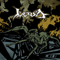 Lycosa - Lycosa medium photo