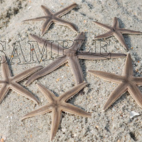 Star_fish_032_copy_medium