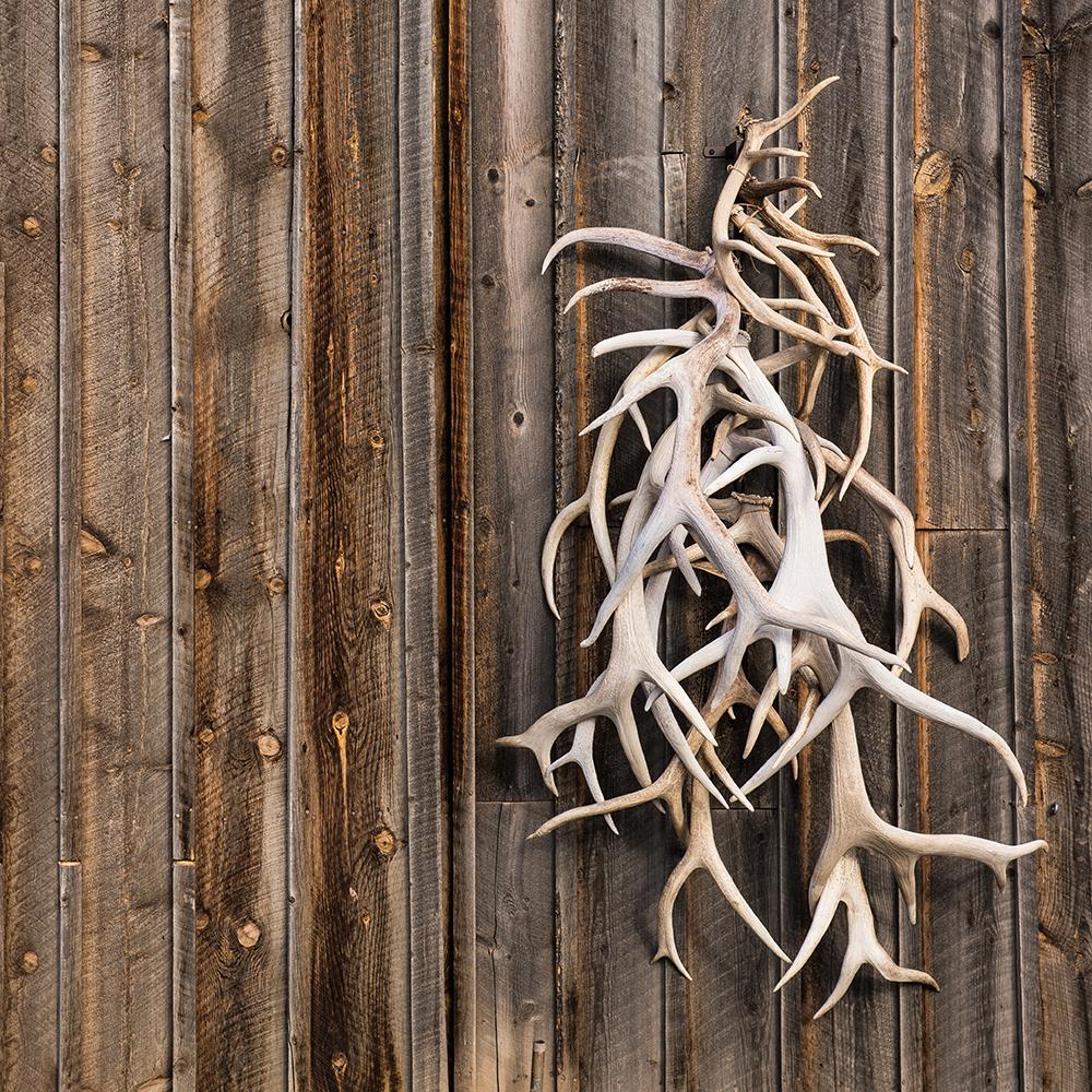 Tine Tower Antler Shed 48 Wall Display For Deer Elk
