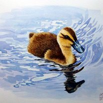 Duckling_medium