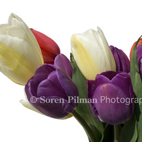C_20_20boquet_20of_20tulips9x12_medium