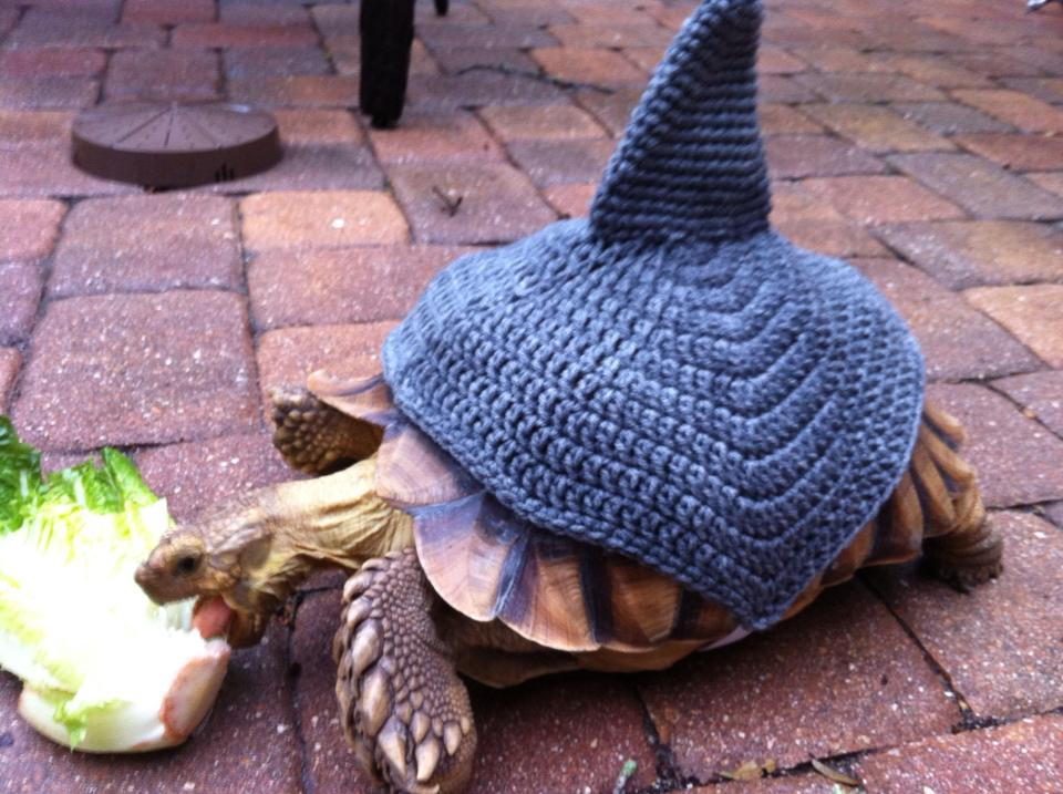 Tortoise Crochet Shark Cozy The Hook Up Online Store Powered By