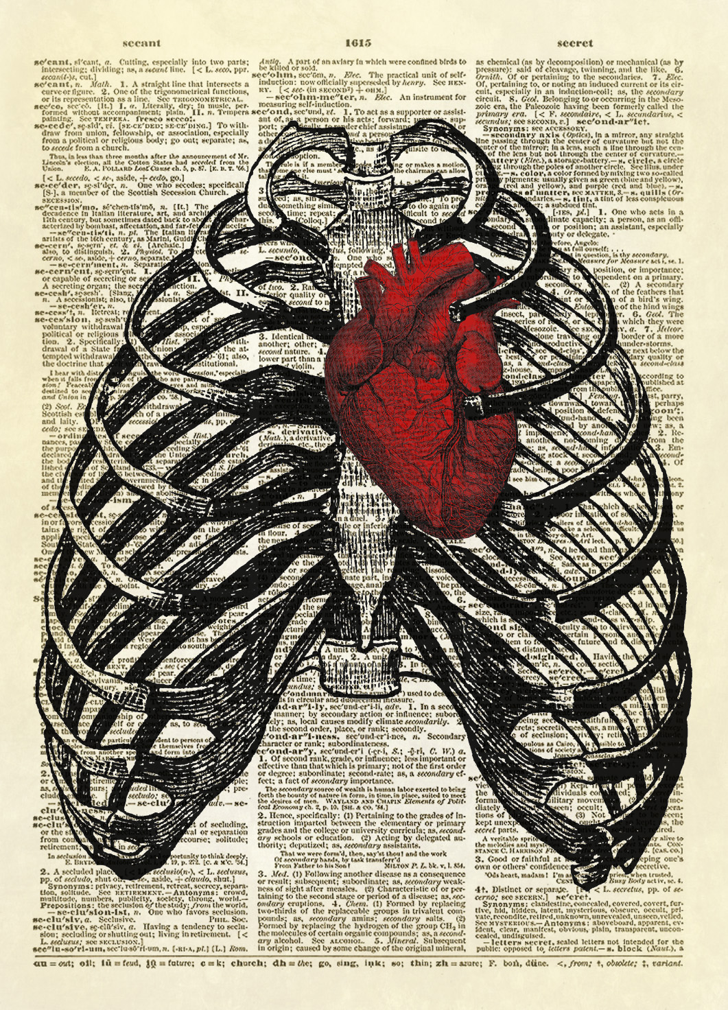 Human Thorax with Human Heart Dictionary Art Print No. 10 ...