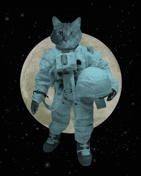 cat dressed as astronaut - photo #5