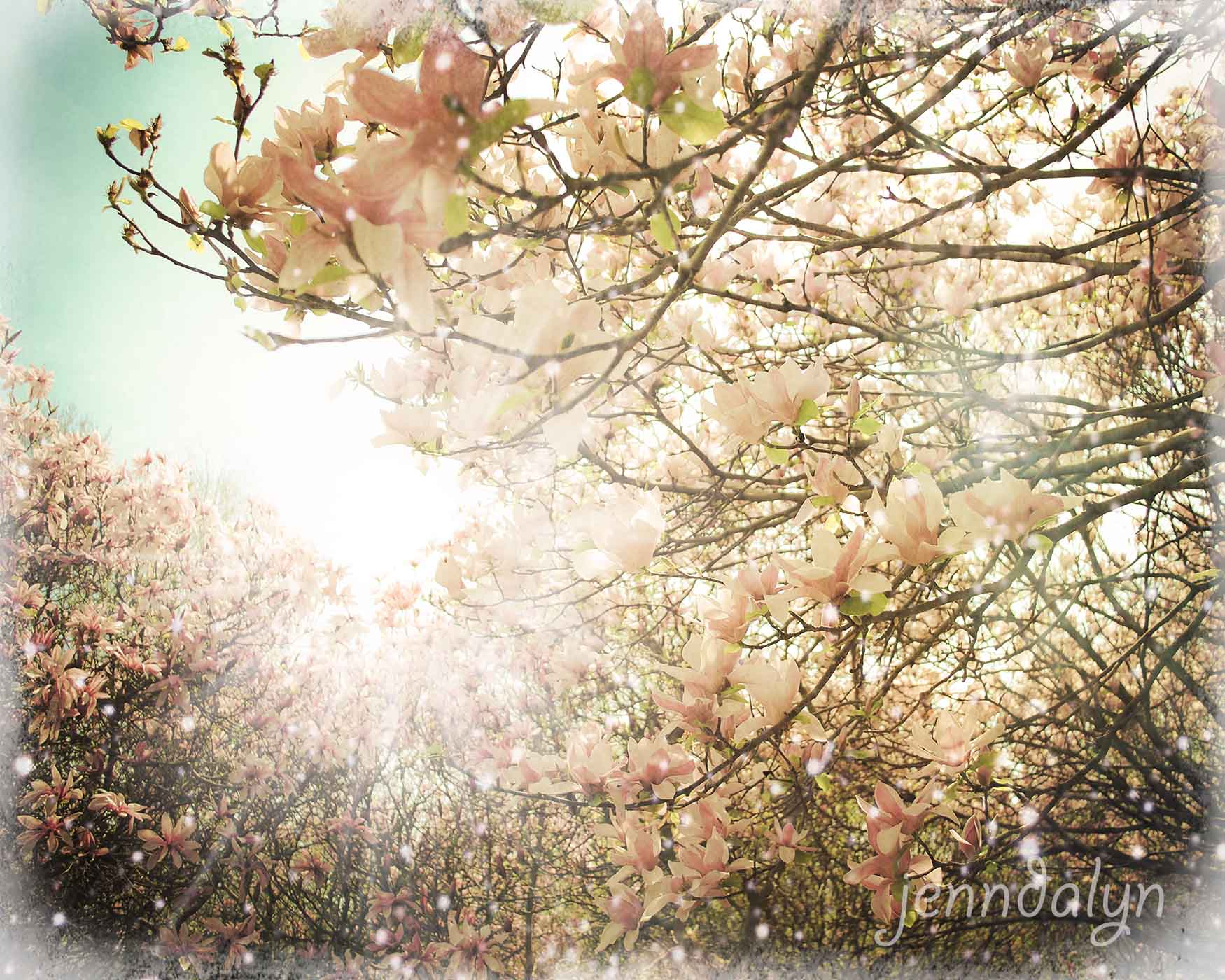In Bloom 8 X 10 Fine Art Photograph Spring Landscape Photography Magnolia Tree Magnolias Pastels Romantic For Her Jenndalyn Art Online Store Powered By Storenvy