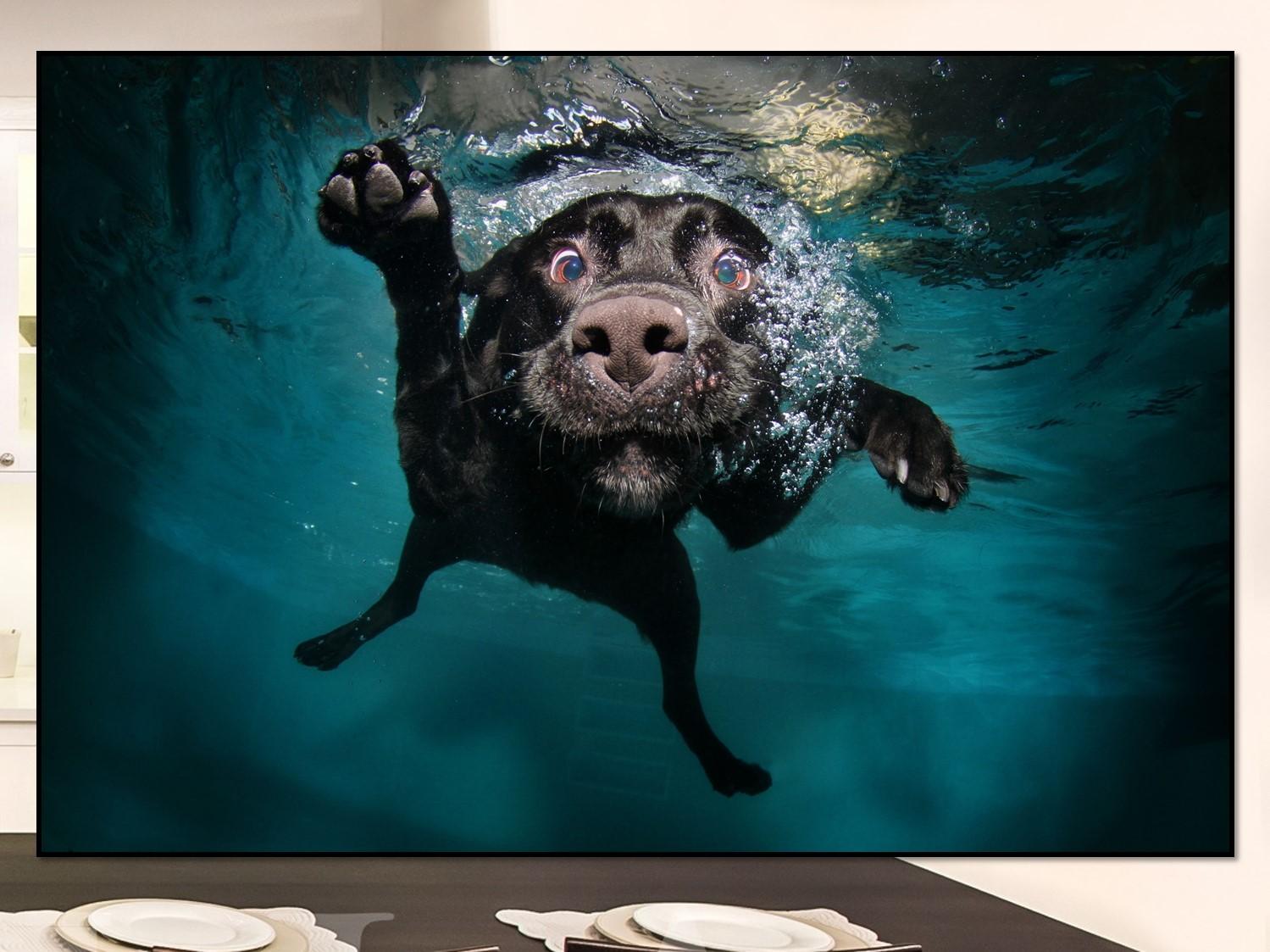 Dog Swim Home Art High Quality Giclee Prints on Canvas