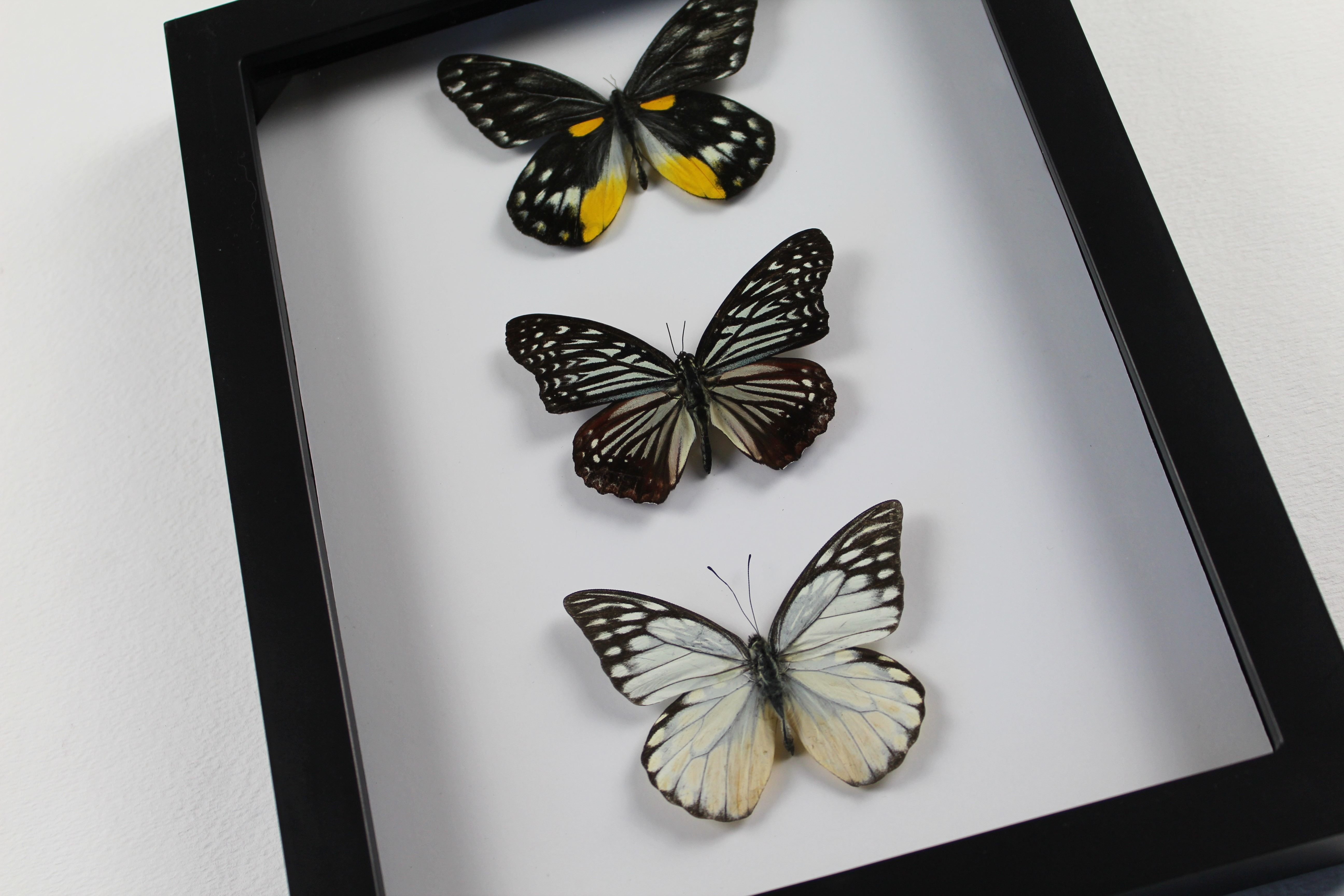 3 Real Butterfly Assortment-Framed Taxidermy on Storenvy