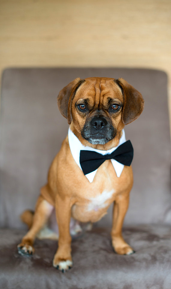 Dog White Shirt Collar And Bow Tie On Storenvy